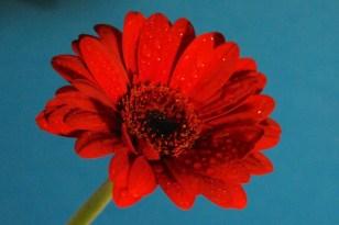 Flower by Paul Cummings