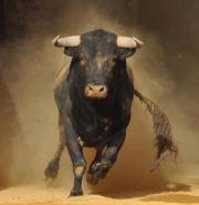 bull case