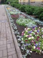 pansies at the entrance