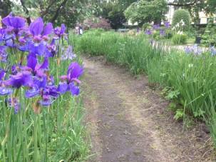 there was a whole corner of the garden dedicated to different varieties of iris