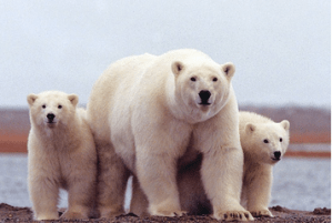 Protect Arctic Refuge
