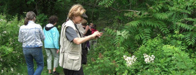 Admiring the flora and fauna during a 'Walk in the Wood's
