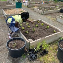 Ulysses Byas Elementary School Student planting at the Garden