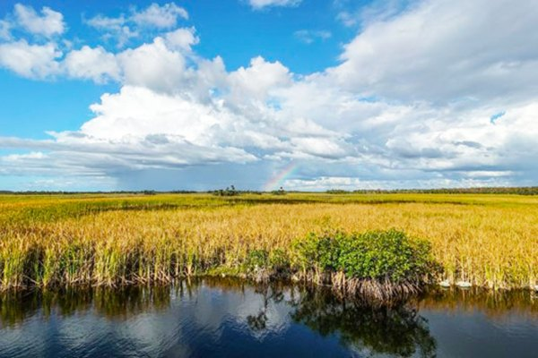 "The unique sawgrass, mangrove and ""tree island"" character of the Everglades. Photo credit: Friends of the Everglades"