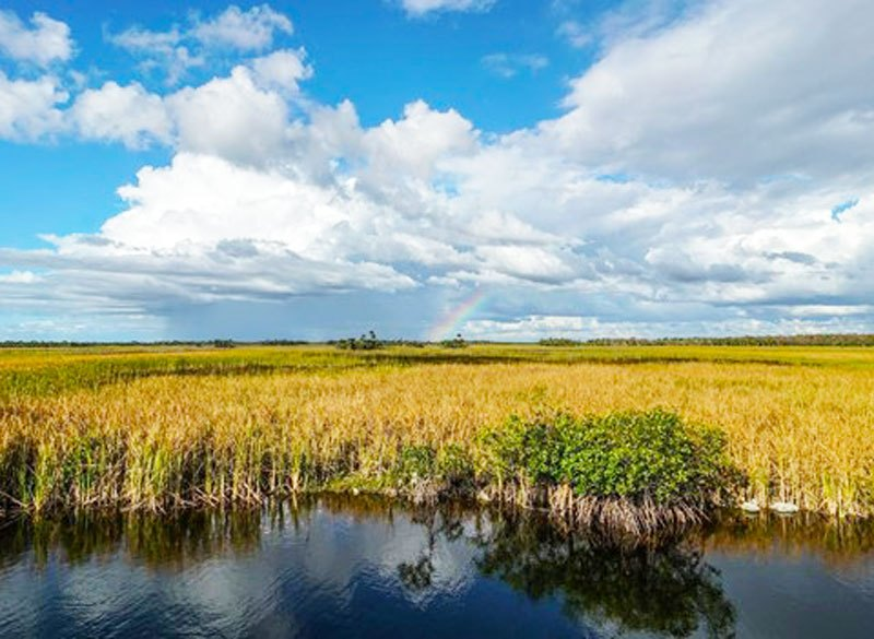 """The unique sawgrass, mangrove and """"tree island"""" character of the Everglades. Photo credit: Friends of the Everglades"""