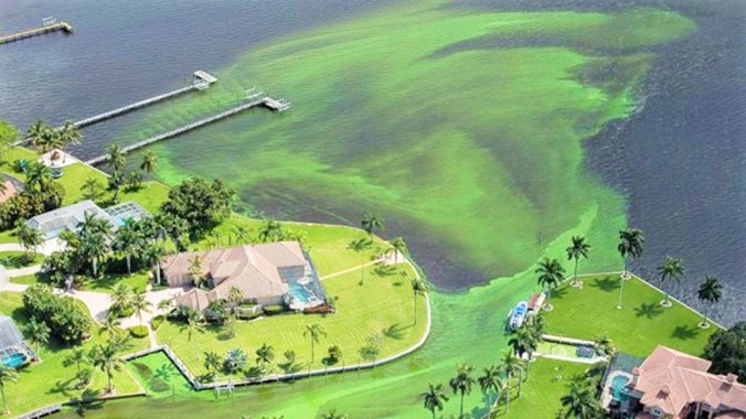 Discharges of toxic algae from Lake Okeechobee through the St. Lucie river to the coast in 2016. Photo credit: Greg Lovett, Palm Beach Post