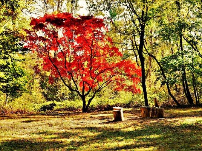 Jan-Guga_Humes-tree-(1)