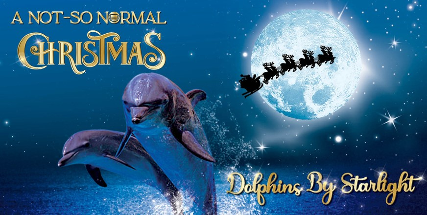 Book now to see the delightful Dolphins by Starlight December show.