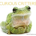 Curious Critters – Leaping, Flying, And Coming Your Way!