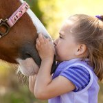 In The Company of Horses – Equine Assisted Psychotherapy Focuses On Solutions