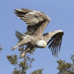 Jewels Of The Sky – Appreciating The Diversity, Beauty, And Intrinsic Value Of Birds