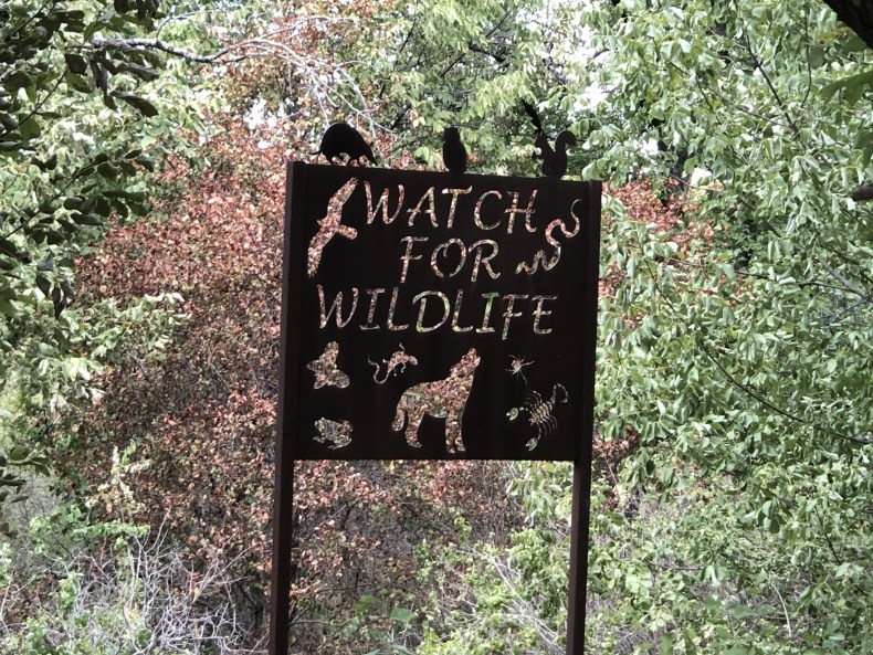 Watch for Wildlife at Arbor Hills