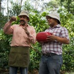 a demonstration on extracting a coffee bean at Cafe Britt