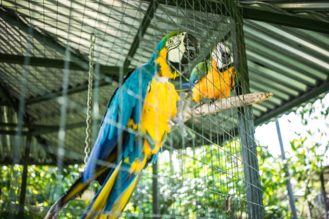 more colorful birds at the Toucan Rescue Ranch