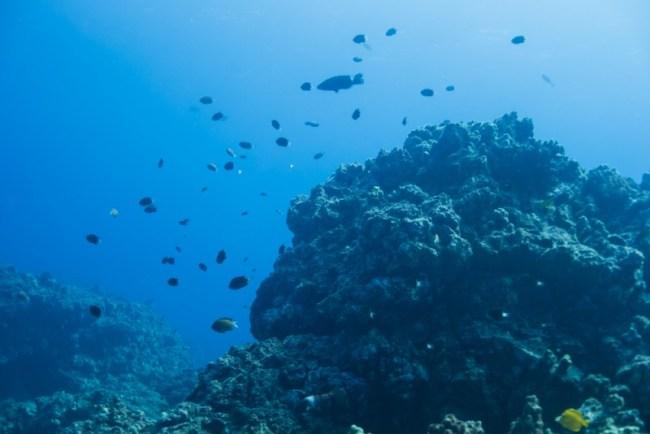 Diving on Hawaii's Big Island with Kona Diving Company