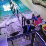 Clearwater Marine Aquarium, Florida