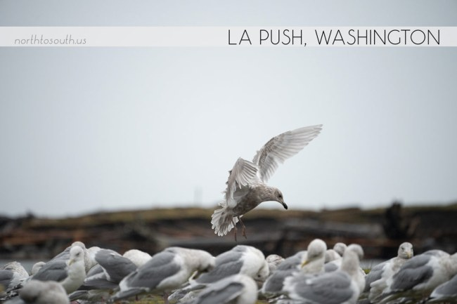 North to South's Year in Review 2019 | La Push, Washington