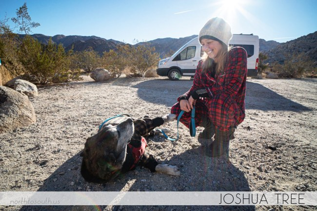 North to South's Year in Review 2019 | Camping at Joshua Tree with Tiger