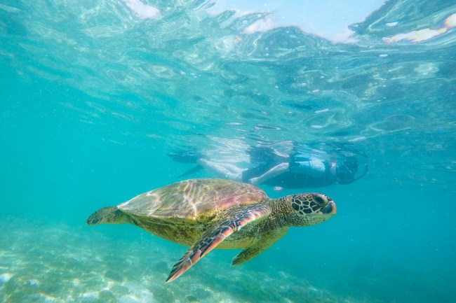 Ian snorkeling alongside a sea turtle during our San Cristóbal 360 Tour