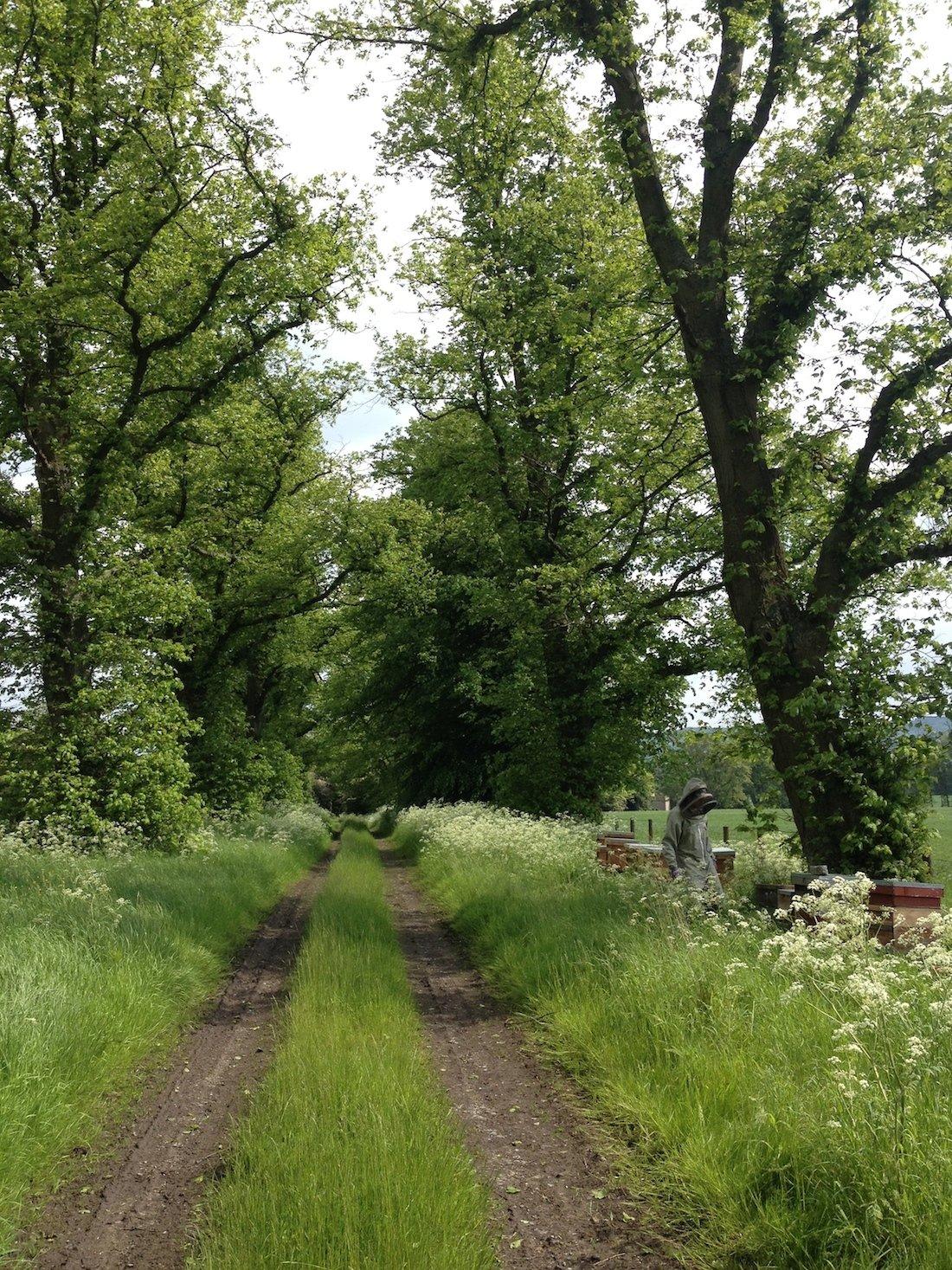 Lime Tree Avenue | Producing Runny Honey