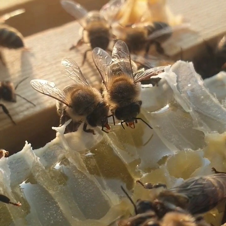 Bee Health   DASH   Disease Accreditation Scheme in Honeybees