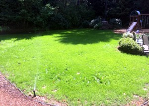 new lawn from grass seed