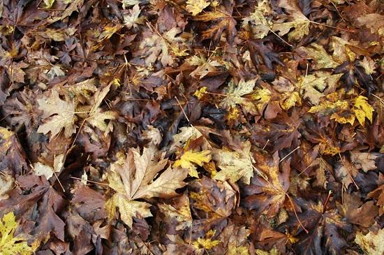 leaf cleanup