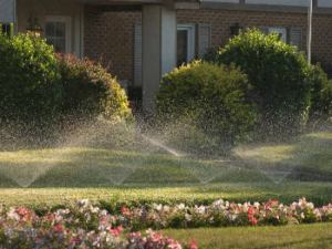Sprays in a lawn instead of rotors