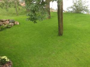 Hydroseeded Lawn