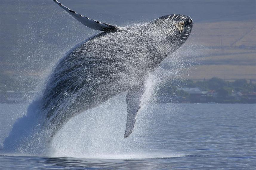 boater hits whale puget sound