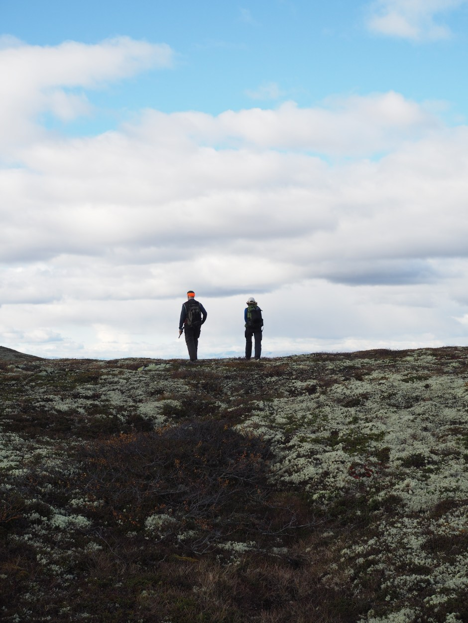 Grouse Hunting in Norway (Rypejakt)