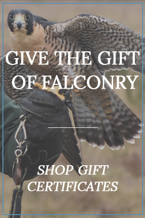 Welcome - Northwood Falconry