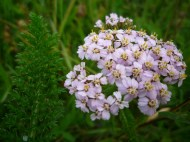 2014-06-30 Sutton Bank - Yarrow - by Kirsty Brown