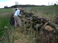 River Esk Volunteers - hedgerow restoration