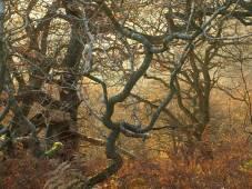 Autumn birch and oak trees - copyright NYMNPA