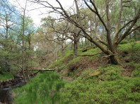 Upland woodland in NYM - copyright NYMNPA