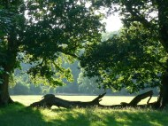 View across Duncombe Park - copyright Paul Harris, NYMNPA