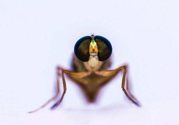 closeup photo of fly looking at camera titled Hi by Charles Dana