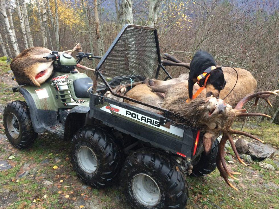 Tysk jaktterrier på hjortejakt, sitter på atv.