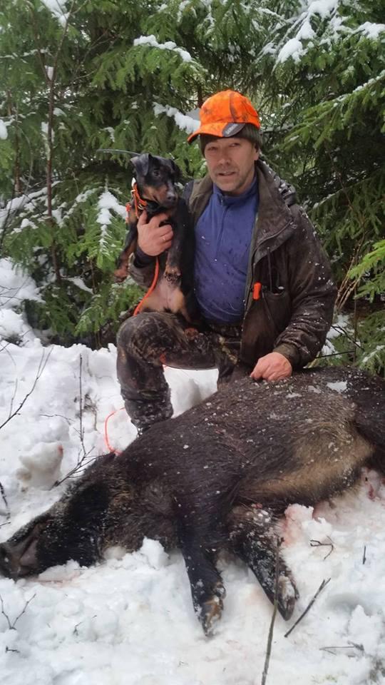 Jan Inge Skjerven på villsvinjakt med tysk jaktterrier