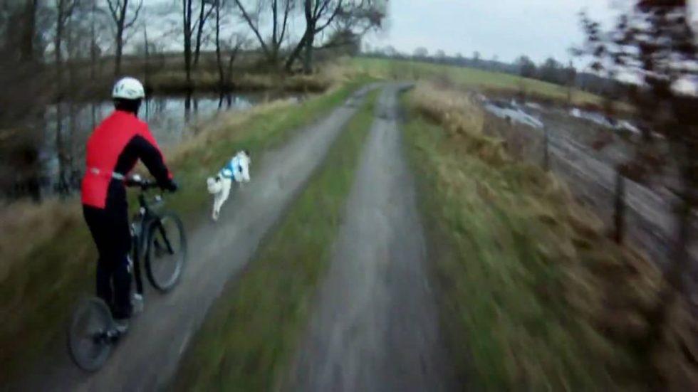 Trening av hund med sparkesykkel
