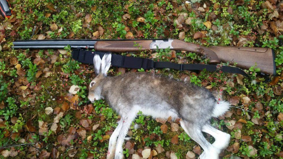 hare og hagle etter harejakt