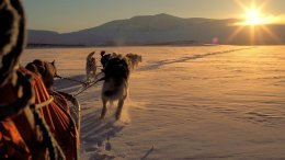 Dog sled racing through the landscapes of Northern Norway