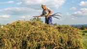 Farmer, Farmers actions upsets damages claims