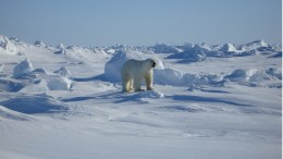Norwegians to move to Svalbard