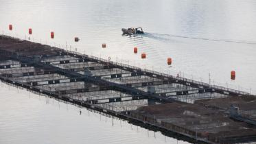 Marine Harvest Chile Salmon farm