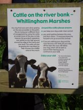 Seasonal grazing of Whitlingham Marsh by Dexters.
