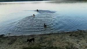 Innsjø, Hundene vasser og svømmer
