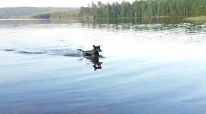 Innsjøen, hvor Emil kommer svømmende mot land