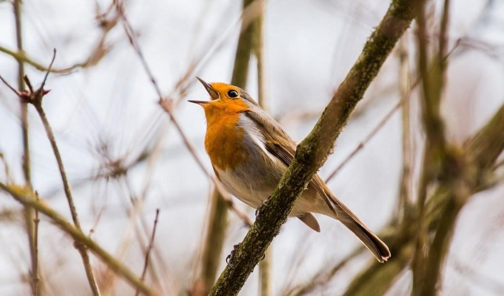 Birds aren't afraid to sing